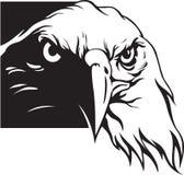 орел Стоковые Изображения RF