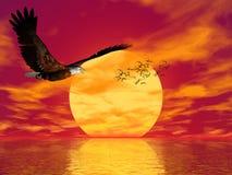 орел accipitridae американский облыселый Стоковое Фото