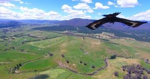 Орел swooping в красивую съемку ландшафта природы сток-видео