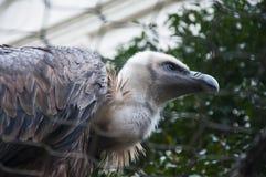 Орел в Амстердаме Стоковые Изображения