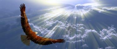 Орел в полете Стоковое фото RF