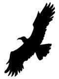 Орел, король птиц Стоковое Изображение