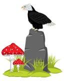 Орел на камне Стоковая Фотография