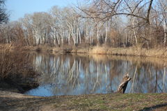 Орел реки в Украине Стоковое Фото
