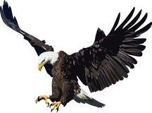 Орел бесплатная иллюстрация