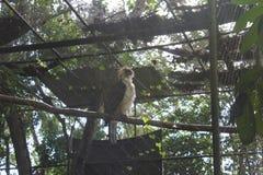 орел philippine стоковые изображения rf