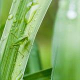 Оригинал зеленого цвета Стоковая Фотография RF