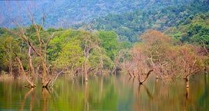 оригинал озера ветви осени Стоковая Фотография RF