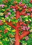 оригинал цветка кровати Стоковые Фото