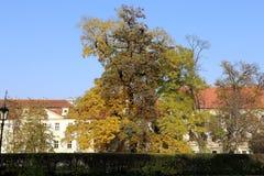 Ориентир ориентиры в замке Праги сложном, чехия Замок Праги посещать привлекательность в городе Стоковые Фотографии RF
