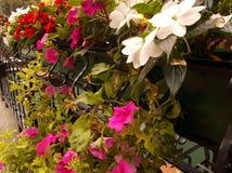 Орнаментальные заводы в цветочных горшках стоковое фото rf