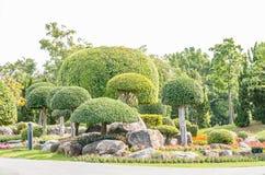 Орнаментальные заводы, деревья карлика в парке Стоковые Фото