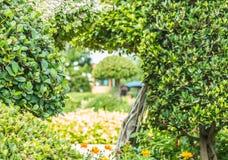 Орнаментальные заводы, деревья карлика в парке Стоковые Изображения