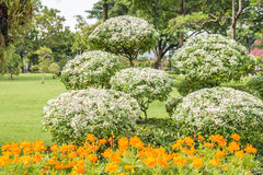 Орнаментальные заводы, деревья карлика в парке Стоковая Фотография