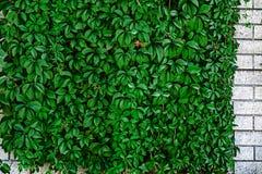 Орнаментальная стена 14 Стоковые Фото