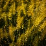 Орнаментальная трава ландшафта Стоковое Изображение