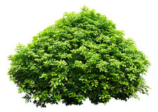 Орнаментальное дерево Стоковые Изображения