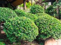 Орнаментальные деревья в парке Конец-вверх Стоковая Фотография