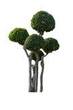 Орнаментальные изолированные деревья Стоковые Изображения