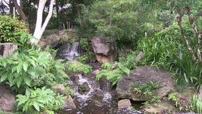 Орнаментальный водопад в благоустраиванном саде японского стиля на садах Брисбена ботанических сток-видео
