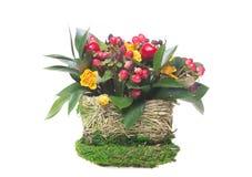 Орнаментальный изолированный цветочный горшок Стоковое фото RF