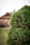 Орнаментальный крупный план дерева Стоковые Фотографии RF