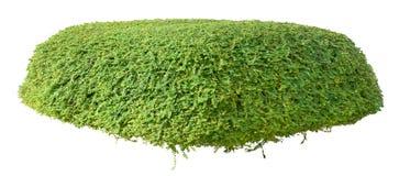 Орнаментальный bush Стоковые Фотографии RF