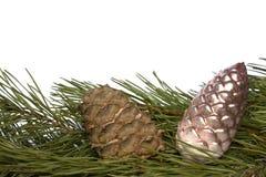орнаменты конуса рождества кедра ветви Стоковые Фотографии RF