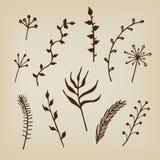 Орнаменты нарисованные рукой флористические Стоковые Фото