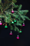 Орнаменты рождества и ветви сосны на черной предпосылке Фиолетовые и зеленые шарики рождества на зеленом цвете украшают ветвь год Стоковое фото RF