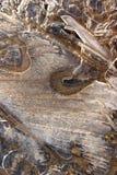Орнаменты льда Стоковая Фотография
