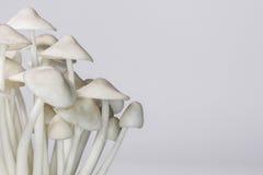 Орнамент гриба Стоковое Изображение