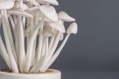 Орнамент гриба Стоковые Изображения