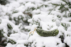 Орнамент рождества соленья рождества в снеге Стоковое Фото
