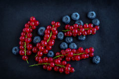 Орнамент с свежими ягодами Стоковые Фотографии RF