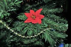 Орнамент цветка рождества Стоковое Фото