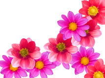 орнамент цветка Стоковая Фотография RF