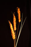 орнамент 3 зерна хлопьев декоративный Стоковые Изображения
