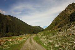 дорога гор montenegro Стоковое фото RF