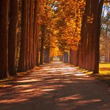 дорога где-то к Стоковая Фотография