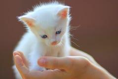 дорога котенка бежит белизна Стоковое Изображение