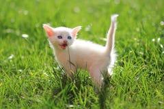 дорога котенка бежит белизна Стоковые Фотографии RF