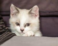 дорога котенка бежит белизна Стоковые Изображения RF