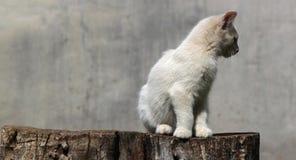 дорога котенка бежит белизна Стоковая Фотография