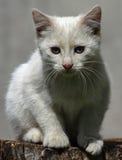 дорога котенка бежит белизна Стоковое фото RF