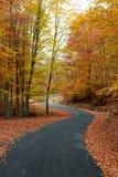 дорога осени цветастая Стоковое Изображение RF