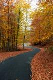 дорога осени цветастая Стоковые Фото