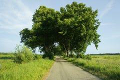 дорога поля к Стоковая Фотография