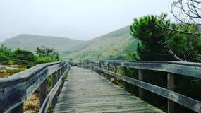 дорога природы к стоковое фото rf