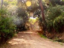 дорога солнечная стоковое изображение